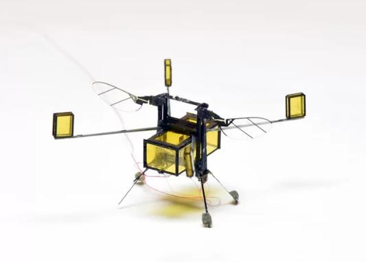 完全可爱的蜜蜂机器人可以做到这一切