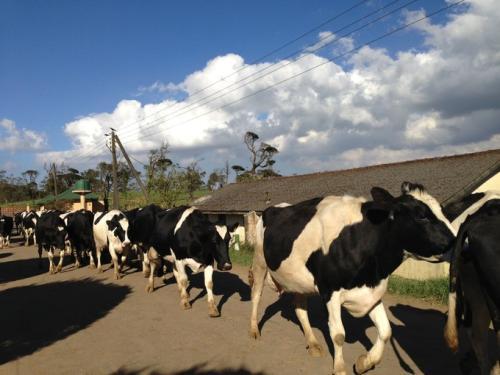 盖伊特拉福德回顾了面对高峰奶牛场时全国绵羊群的最新变化