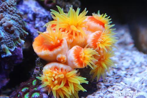 以色列珊瑚救援计划需要凿子和深蓝色的大海