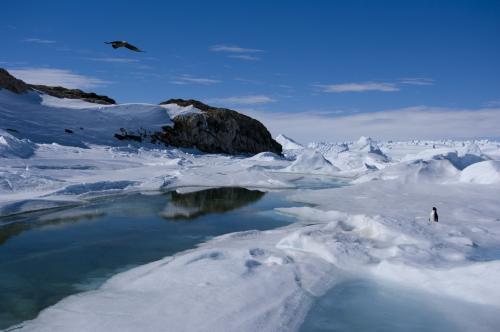 南极冰的生命反映了人类的疾病