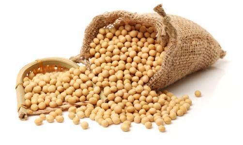 今天大豆价格将横盘整理