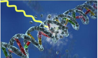 研究可以深入了解太阳诱导的DNA损伤和细胞修复