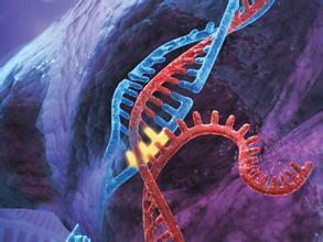 全面审查CRISPR技术在作物中的未来