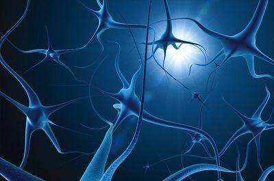 神经科学家已经确定了独特的神经活动模式 这些模式可以编码帮助大脑理解来自外部世界的信号