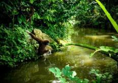 最初的预告片为我们提供了即将到来的基于丛林的冒险的全部摘要
