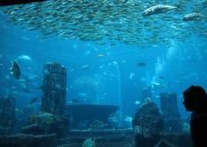 虚拟水族馆将儿童的水生艺术栩栩如生